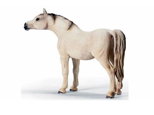 Égua Arabe