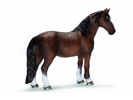 Égua Tennessee