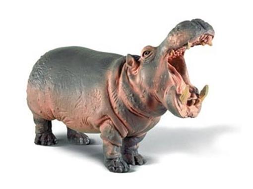 Hipopotamo Macho