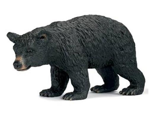 Urso Preto Fêmea
