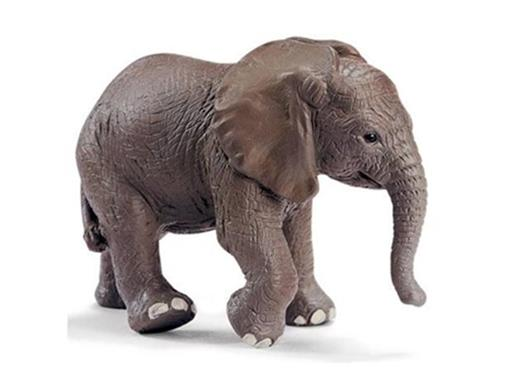 Elefante Africano Filhote