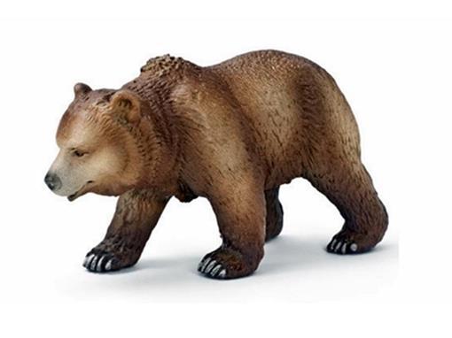 Urso Pardo Fêmea