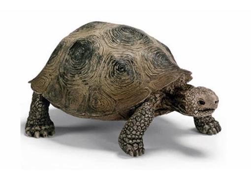 Tartaruga Gigante - Schleich