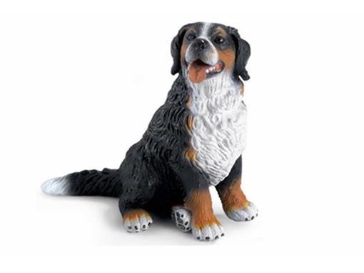 Cachorro Montanhez Bernesse Sentado