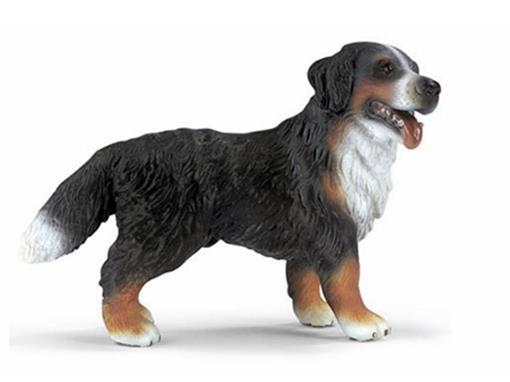 Cachorro Montanhez Bernese