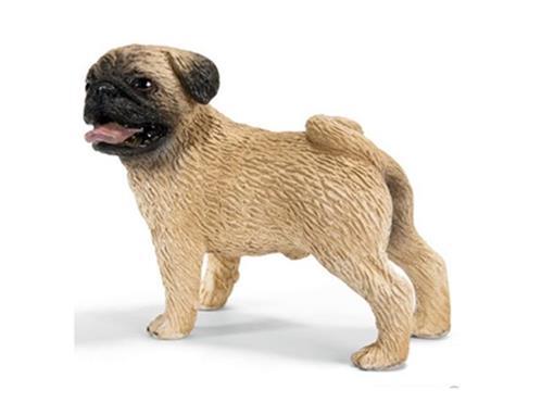 Cachorro Pug Macho