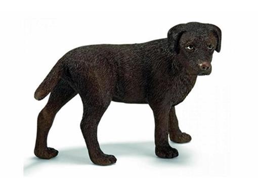 Labrador Fêmea