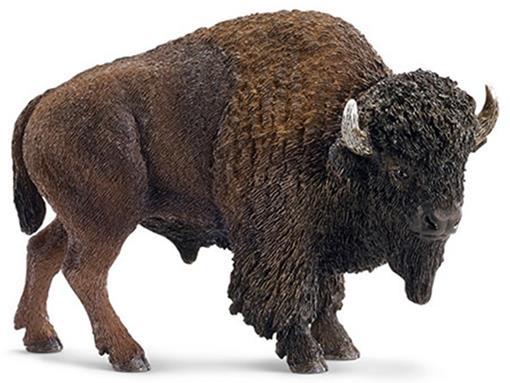 Búfalo Americano