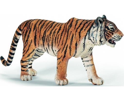 Tigre Macho
