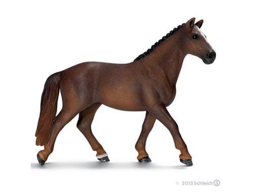 Égua Hanoveriano