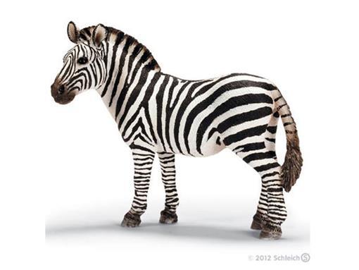 Zebra Fêmea