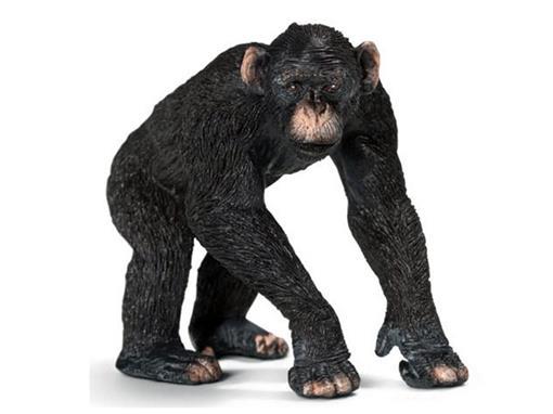 Macaco Chimpanzé Macho