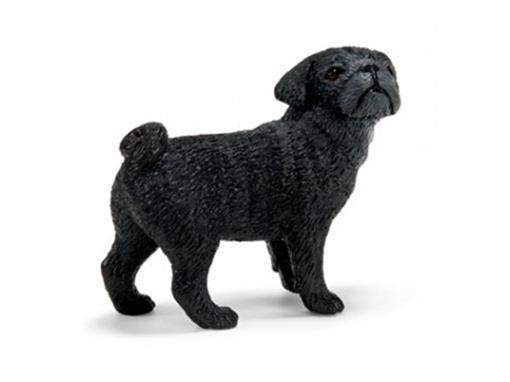 Cão Pug Fêmea