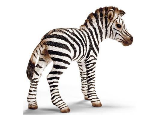 Filhote de Zebra