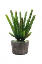 Arranjo Cactus Palma 22cm