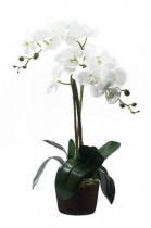 Arranjo Orquídea Branca 80cm