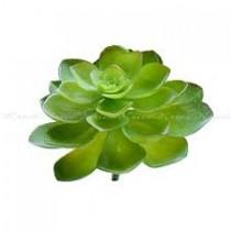 Pick Suculenta 20cm