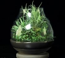 Terrário Cactus em vidro 16cm